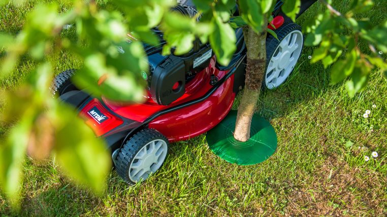 how-to-protect-trees-treeguard-mowing-made-easy-11
